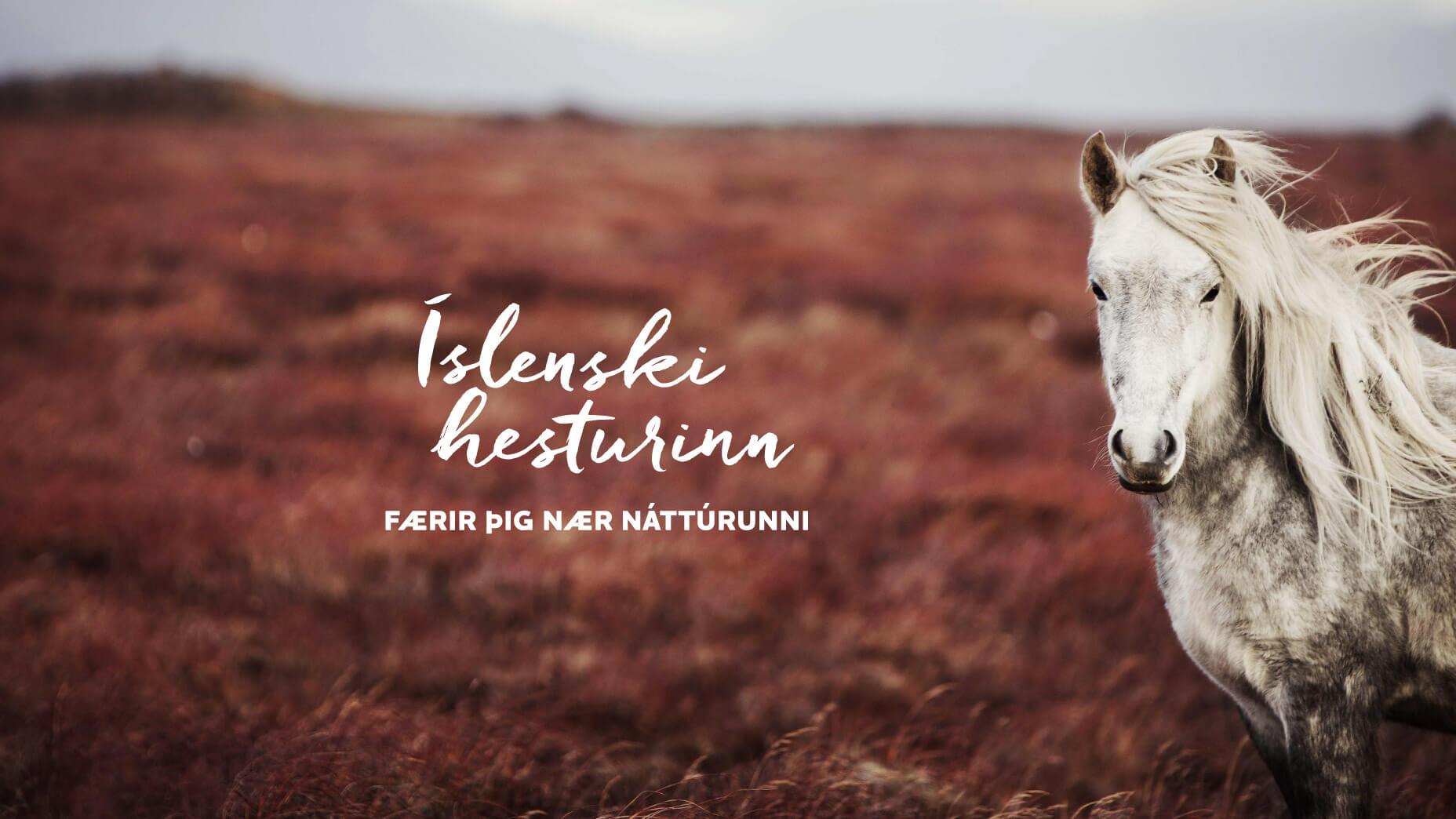 Grár hestur í haustlitum.